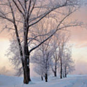 Amazing Landscape With Frozen Snow Covered Trees At Sunrise   Art Print