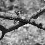 Bare Tree Branches In Early Spring Art Print