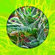 Cannabis 420 Collection Art Print