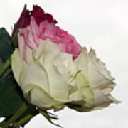 Beautiful Roses Art Print