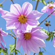 Fully Bloomed Pink Dahlia Imperialis At Garden In November Art Print