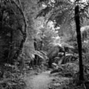 Jungle 45 Art Print