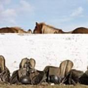 162669 Horse Walls Animals National Geographic Art Print