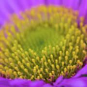 Closeup Of A Colourful Flower Art Print