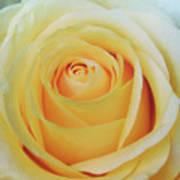 18 Yellow Roses Art Print
