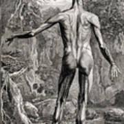 18th Century Anatomical Engraving Art Print