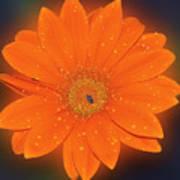 Orange Gerber Art Print