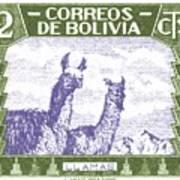 1939 Bolivia Llamas Postage Stamp Art Print