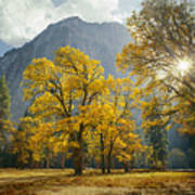 1m6611-oak Trees And Middle Cathedral Rock In Autumn Art Print
