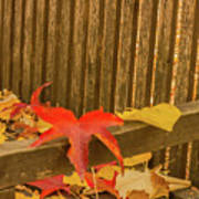 A Foliage Pillow On A Bench In A Woodland Art Print
