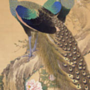 A Pair Of Peacocks In Spring Art Print