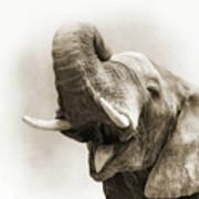 African Elephant Closeup Square Art Print