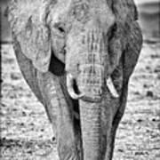 African Elephants In The Masai Mara Art Print