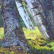 Ancient Totems Of Haida Gwai Art Print