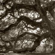Angel Oak Live Oak Tree Art Print