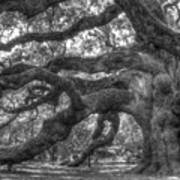 Angel Oak Tree Charleston Sc Art Print by Dustin K Ryan