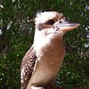 Australia - Kookaburra Full Body Look Art Print