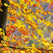 Autumn Beech Leaves Art Print