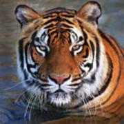 Bengal Tiger Laying In Water Art Print