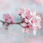 Black Cherry Plum Blossom Art Print