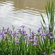 Blue Daffodils Art Print