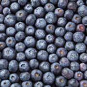 Blueberries Art Print