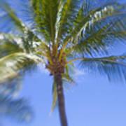 Blurry Palms Art Print