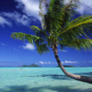 Bora Bora, Palm Tree Art Print