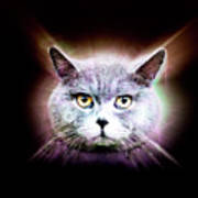 British Shorthair Cat Art Print