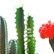 Cactus Plants Art Print