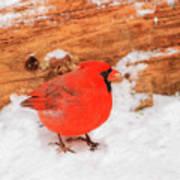 #2 Cardinal In Snow Art Print