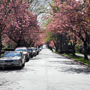 Cherry Blossom In Vancouver City Art Print