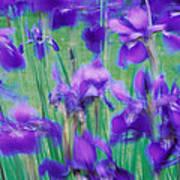 Close-up Of Purple Flowers Art Print