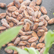 Cocoa Beans Art Print