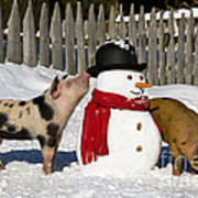 Curious Piglets And Snowman Art Print
