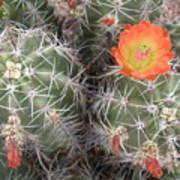 Desert Bloom Art Print