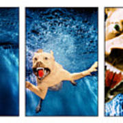 Dog Underwater Series Art Print