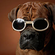 Dog Wearing Sunglasses Print by Chris Amaral