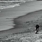 2 Dogs 2 Men Beach  Art Print