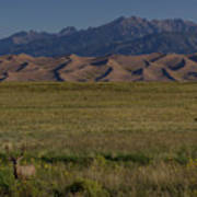Eight Point Buck In The Grass Lands Of The Great Sand Dunes Art Print