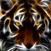 Eye Of The Tiger Print by Wingsdomain Art and Photography