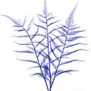 Fern, X-ray Art Print