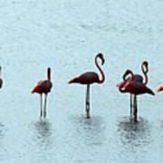 Flamingo Family Art Print