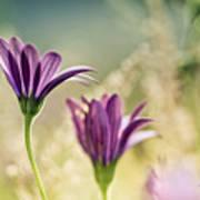 Flower On Summer Meadow Art Print
