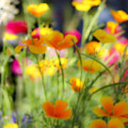 Flowering Garden Art Print
