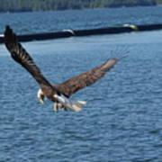 Flying Eagle. Art Print