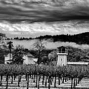 Fog Over The Vineyard Art Print