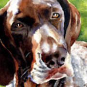 German Short Haired Pointer Art Print