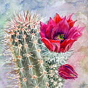 Hedgehog Cactus Art Print