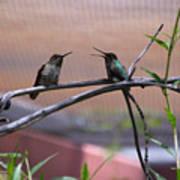 2 Hummingbirds Art Print